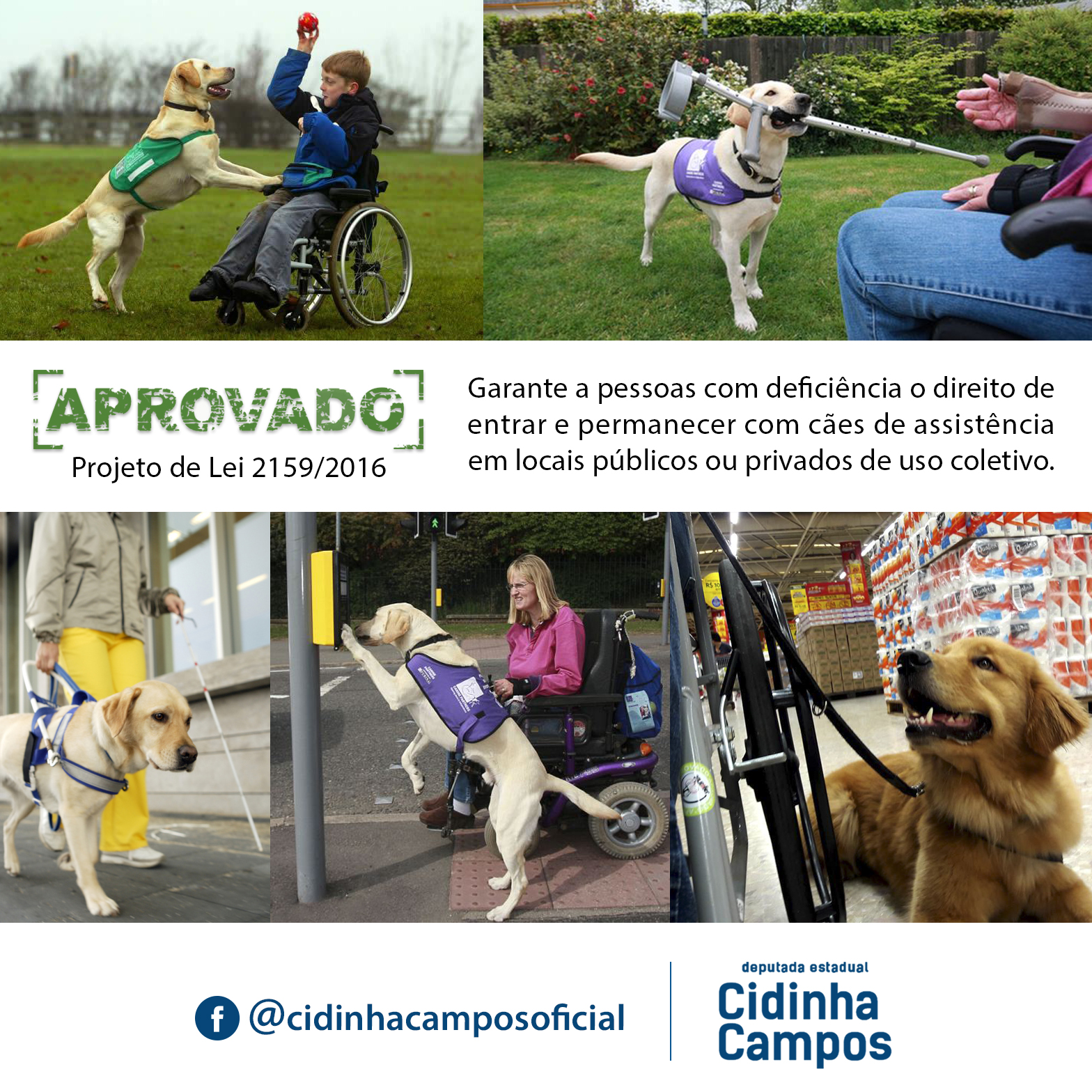 Aprovado! PL garante a pessoas com deficiência o direito de entrar e permanecer com cães de assistência em locais públicos ou privados
